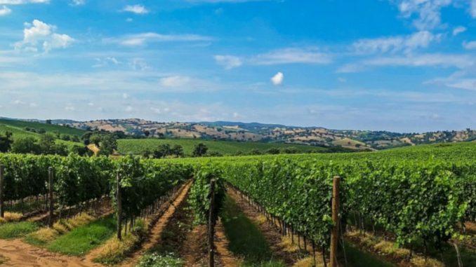winery road e la sua degustazione di vini dell'umbria